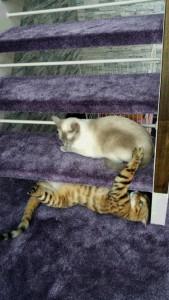 階段カーペット 猫 ペット対策