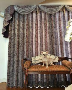 川島織物セルコン FT0171 カーテン